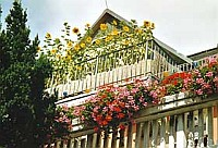 Balkonblumen